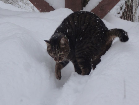 ずーっと雪2