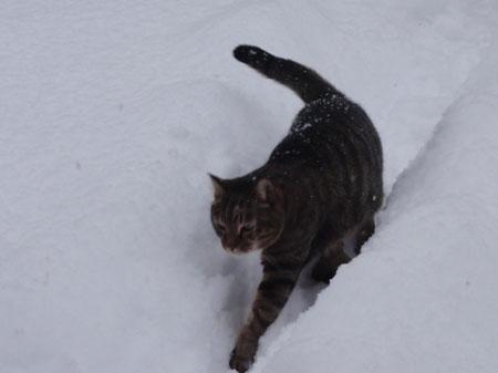 ずーっと雪3