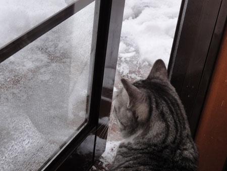 ずーっと雪7
