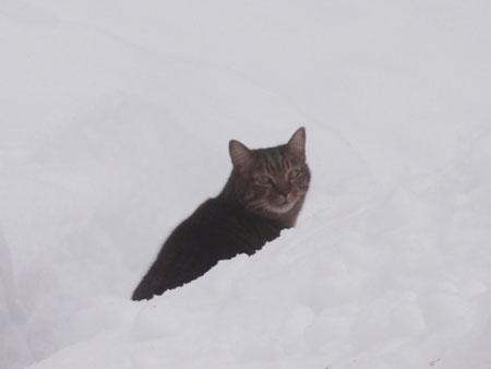 雪でも!3