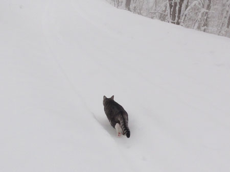 雪でも!6