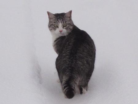 雪でも!7
