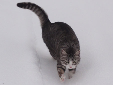 雪でも!8