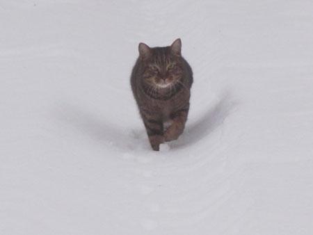雪でも!11