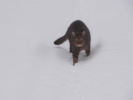 雪でも!17