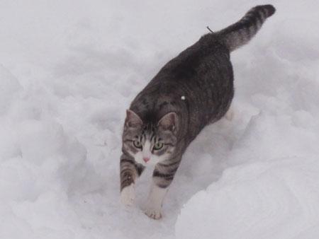 雪でも!18