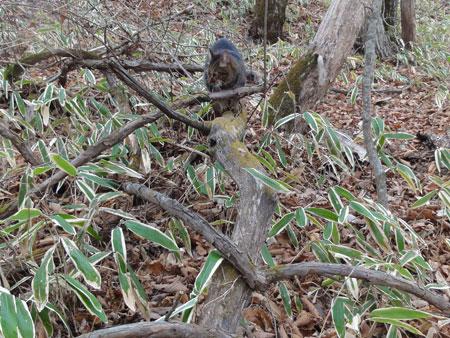 枯れ木の上のマロン1