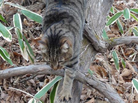 枯れ木の上のマロン6