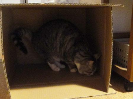 ナナのダンボール箱1