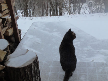 雪の上を歩くには1