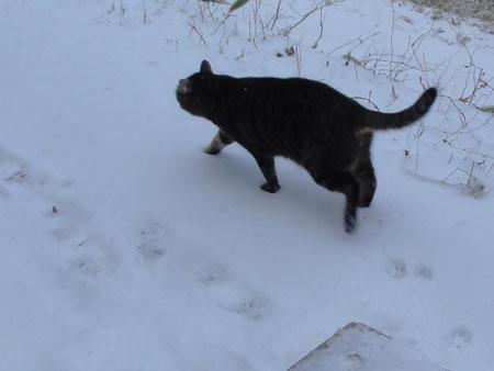 雪の上を歩くには5