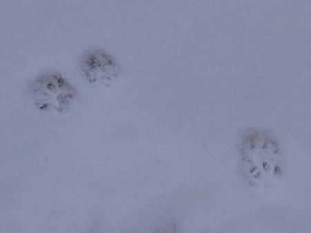 雪の上を歩くには7