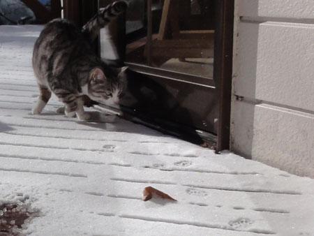 雪のなかを・・・出る?2