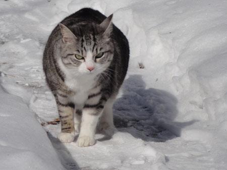 氷点下8度のお散歩4