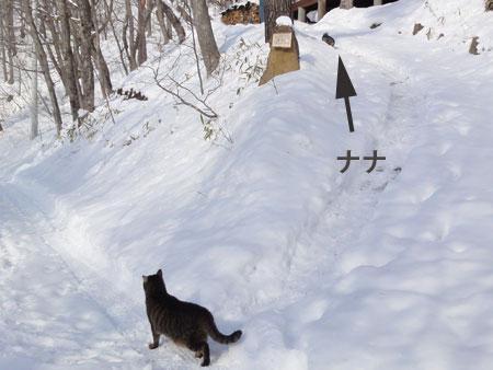 氷点下8度のお散歩5