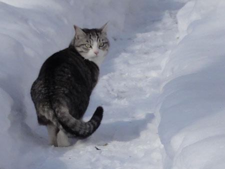 氷点下8度のお散歩6