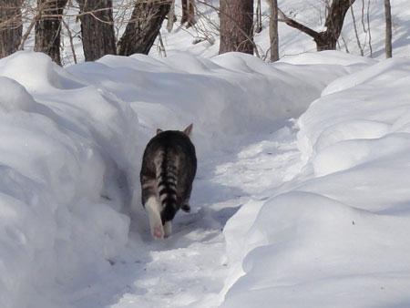 氷点下8度のお散歩8