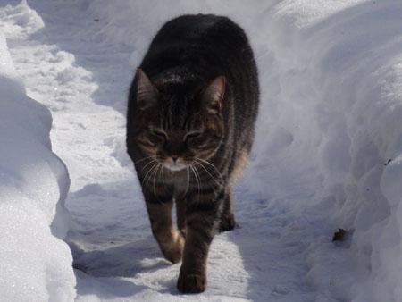 氷点下8度のお散歩9