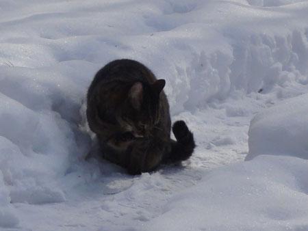 氷点下8度のお散歩10