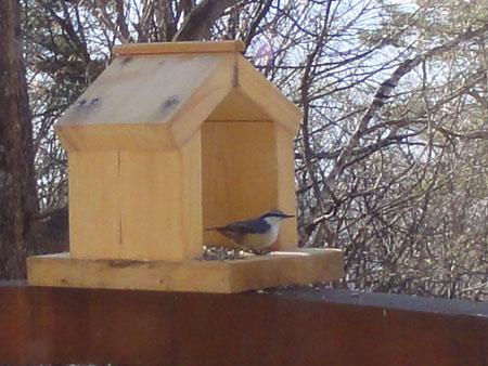 小鳥さん8