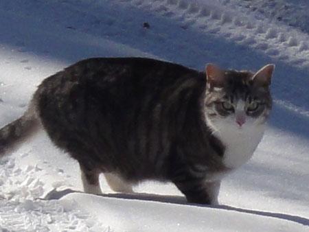 雪猫?ナナ5