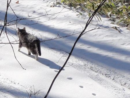 雪猫?ナナ6