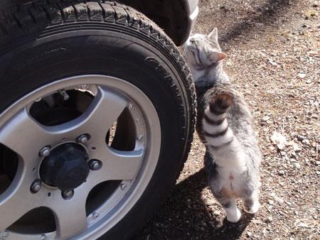 車の匂い?2