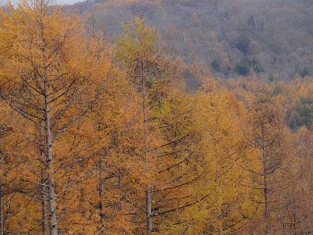 koyo3_20111103133243.jpg