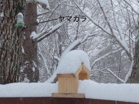 yamagara_20120305090700.jpg