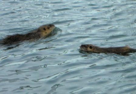 恐ろしい寒中水泳