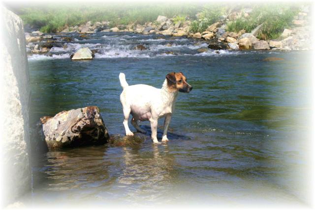 縮小  ポォーさんの川遊び