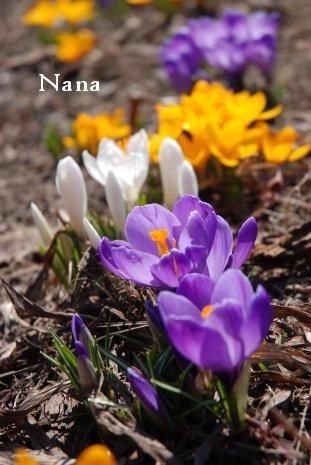 flower16-2.jpg