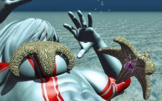 Starfish(4)