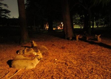 夜の鹿さん
