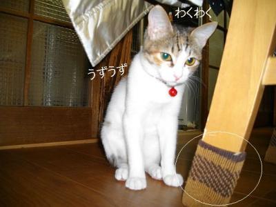 ネコ御殿01