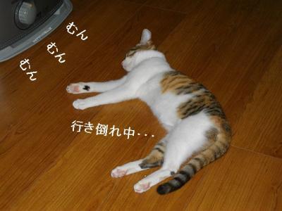 ネコ御殿03