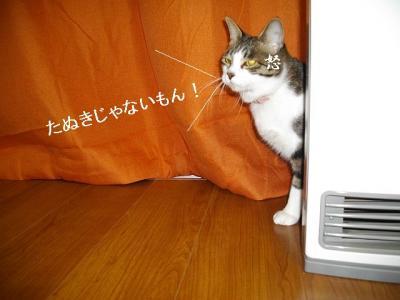 ネコ御殿05