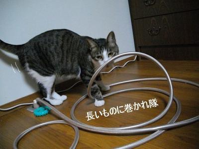 ネコ御殿07