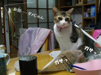 猫たこ焼01