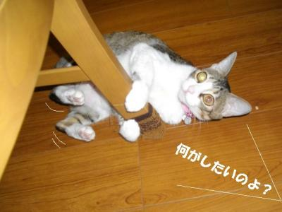 猫たこ焼02