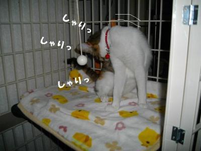 猫たこ焼03