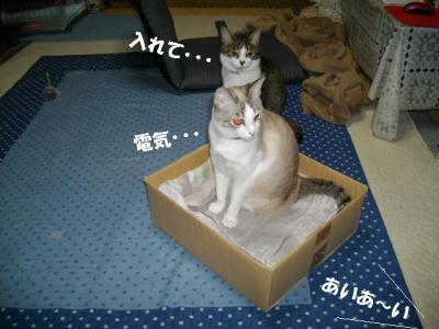 猫たこ焼04