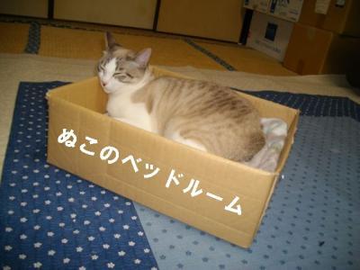 猫たこ焼05