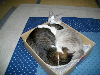 猫たこ焼07