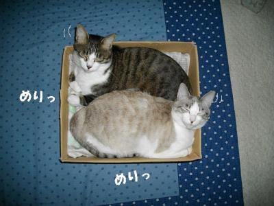 猫たこ焼09