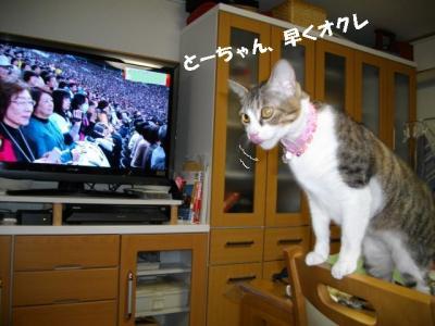猫の節分01