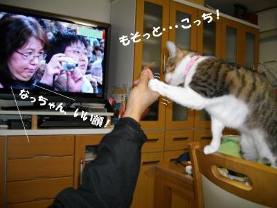 猫の節分02