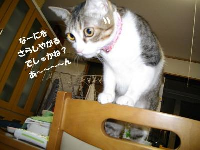 猫の節分05