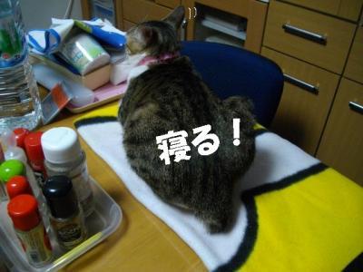 猫の節分07