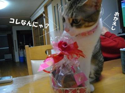 猫三昧02